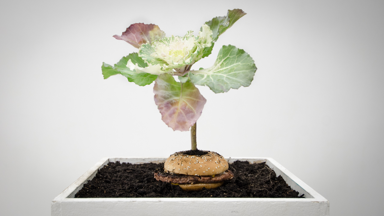 What is Food: Burger and Cabbage installation in Edinburgh, Scotland (Patrick Lydon and Vero Alanis)