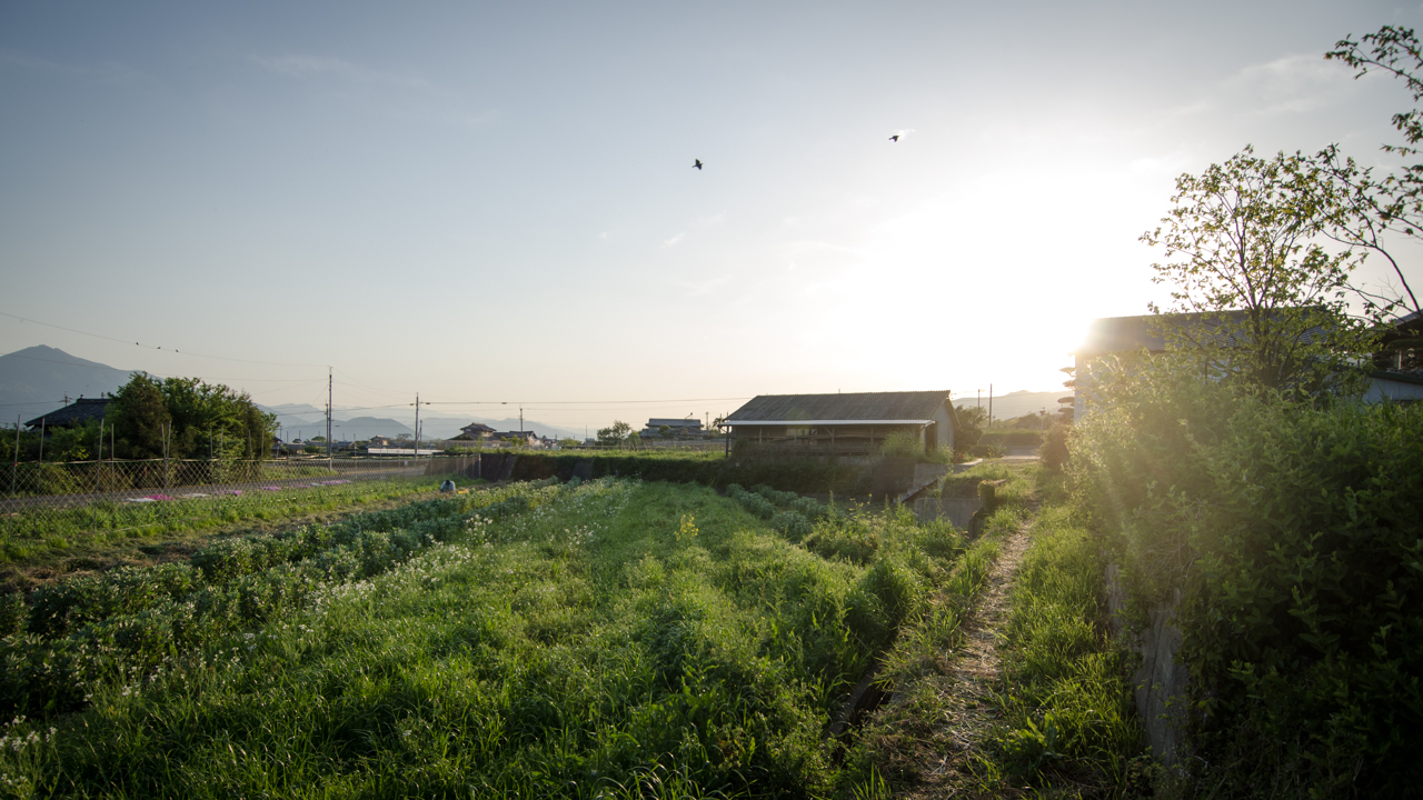 One of Okitsu's natural vegetable fields at his farm in Shikoku, Japan