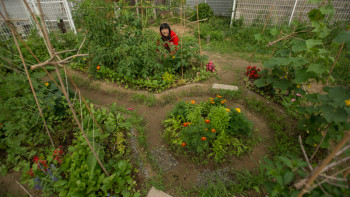 Final Straw co-director Suhee Kang works in the herb garden. Image: Patrick Lydon, FinalStraw