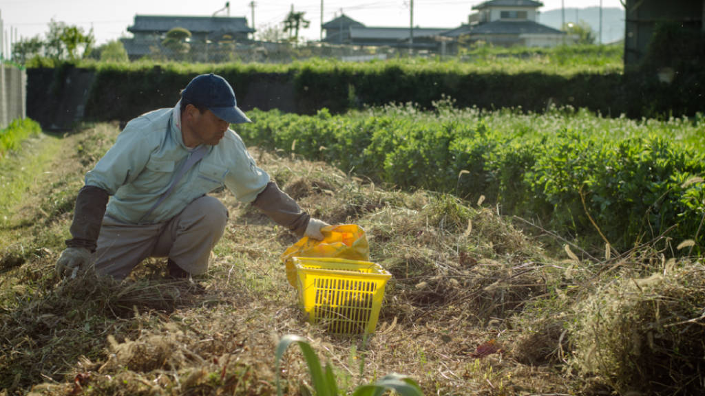 Kazuaki Okitsu on his natural farm in Shikoku, Japan (photo: P.M. Lydon, Final Straw)