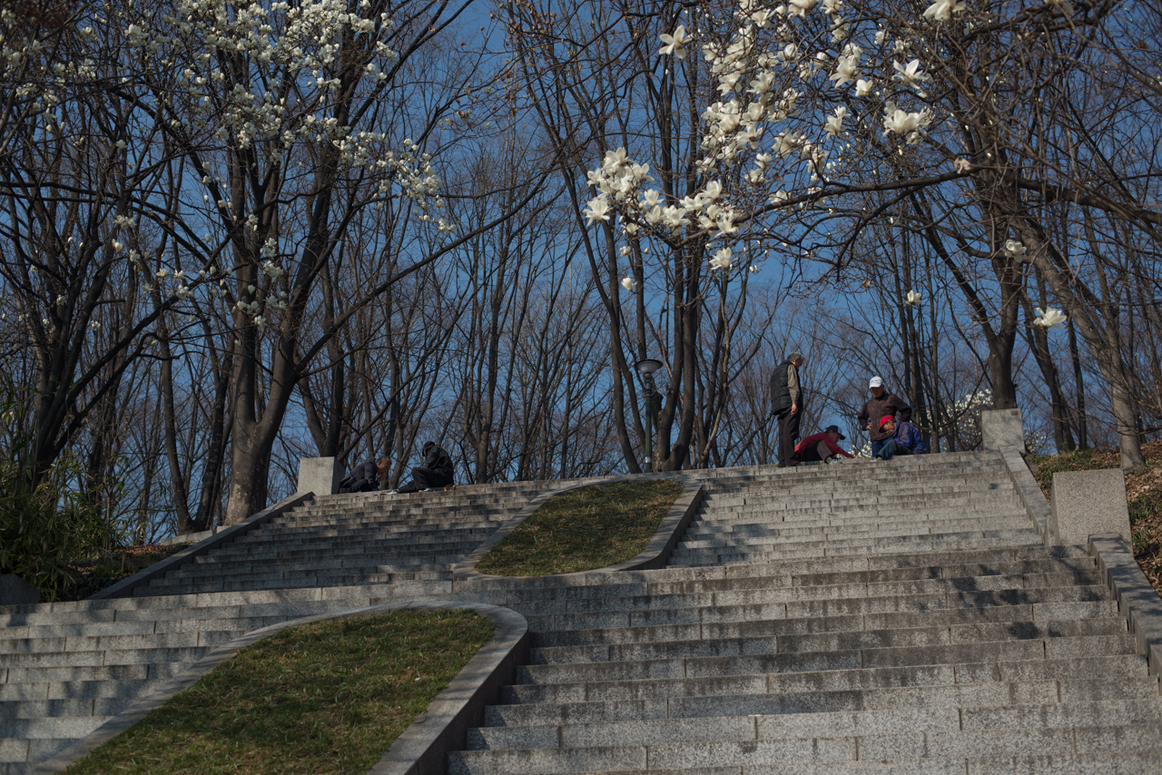 Men play traditional board games as spring blossoms in Seoul, South Korea | photo by P.M.Lydon