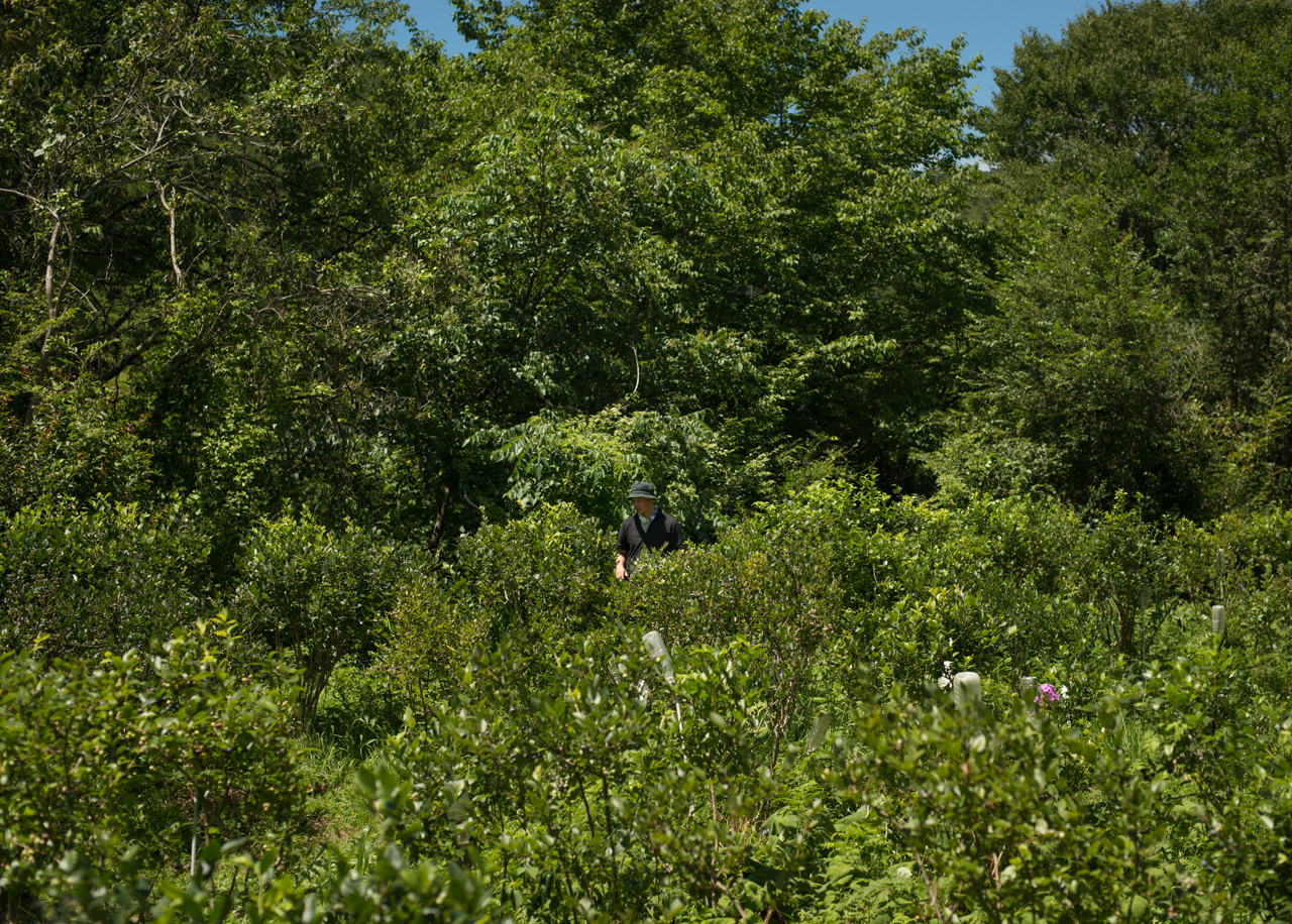 agoya-based art curator Ikumasa Hayashi, picking blueberries in a field thick with green trees and flowers.