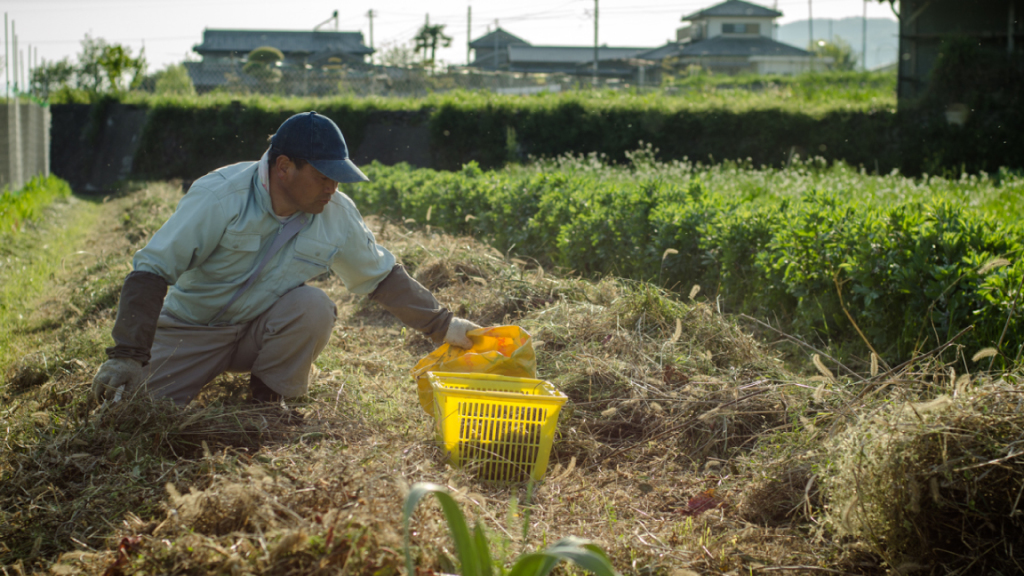 Okitsu, planting root vegetables in his field (photo: Patrick Lydon)