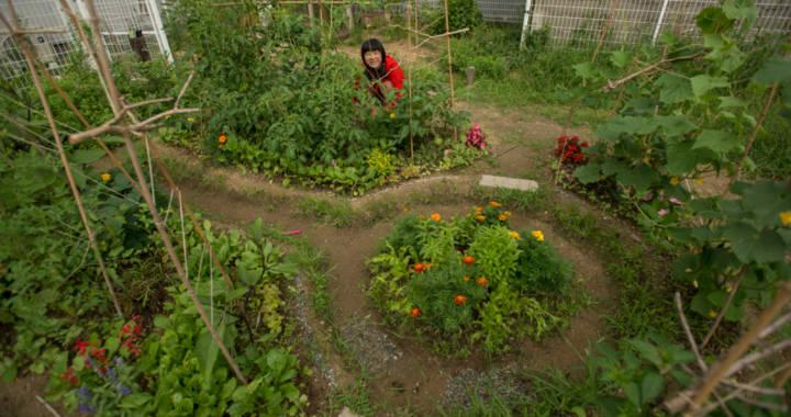 Urban Pocket Farm
