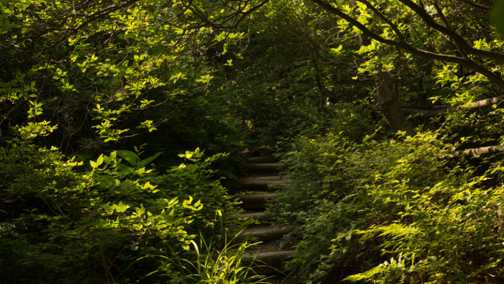 Stairs through the forest at Bukhan National Park in Seoul, South Korea   photo by P.M.Lydon