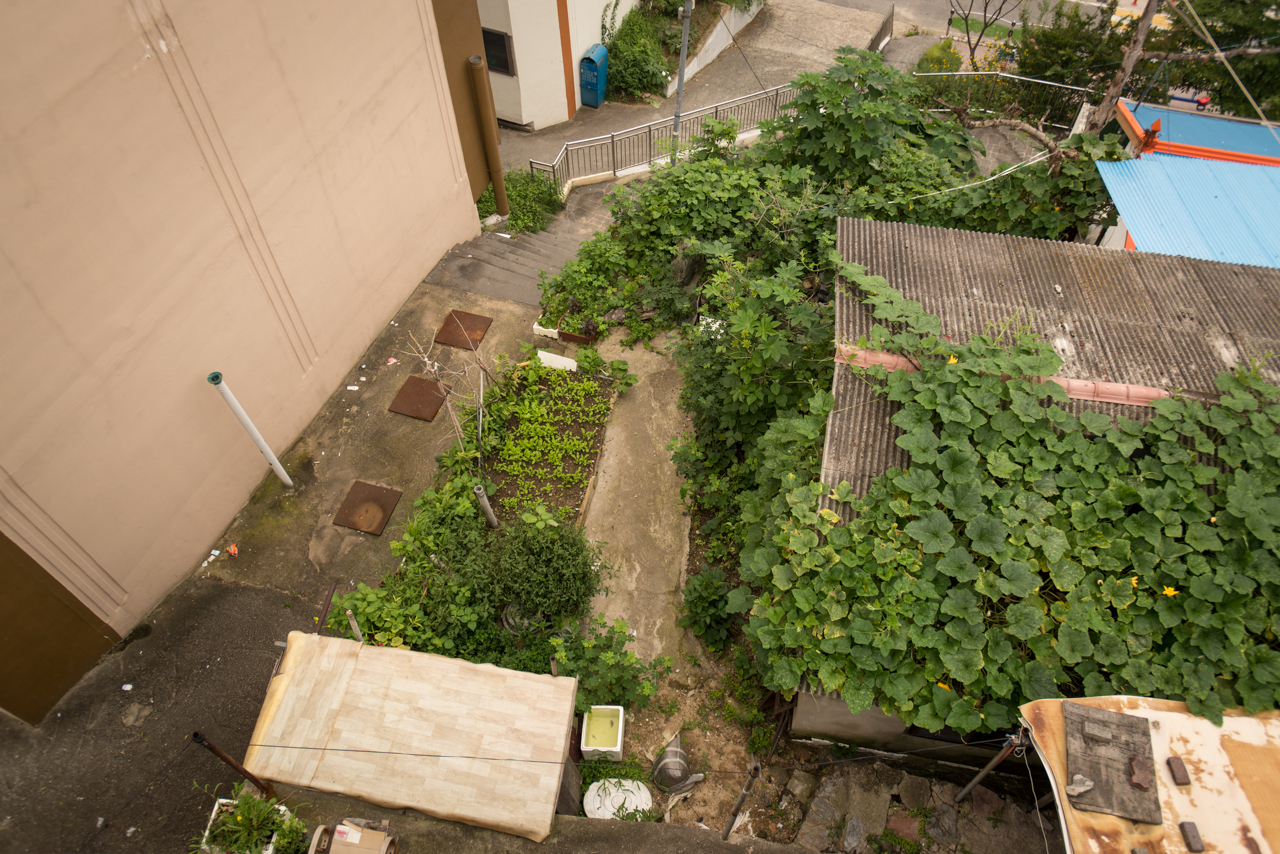 A sprawling garden tucked in between concrete in the Daedong neighborhood, Daejeon, South Korea | photo: Patrick M. Lydon