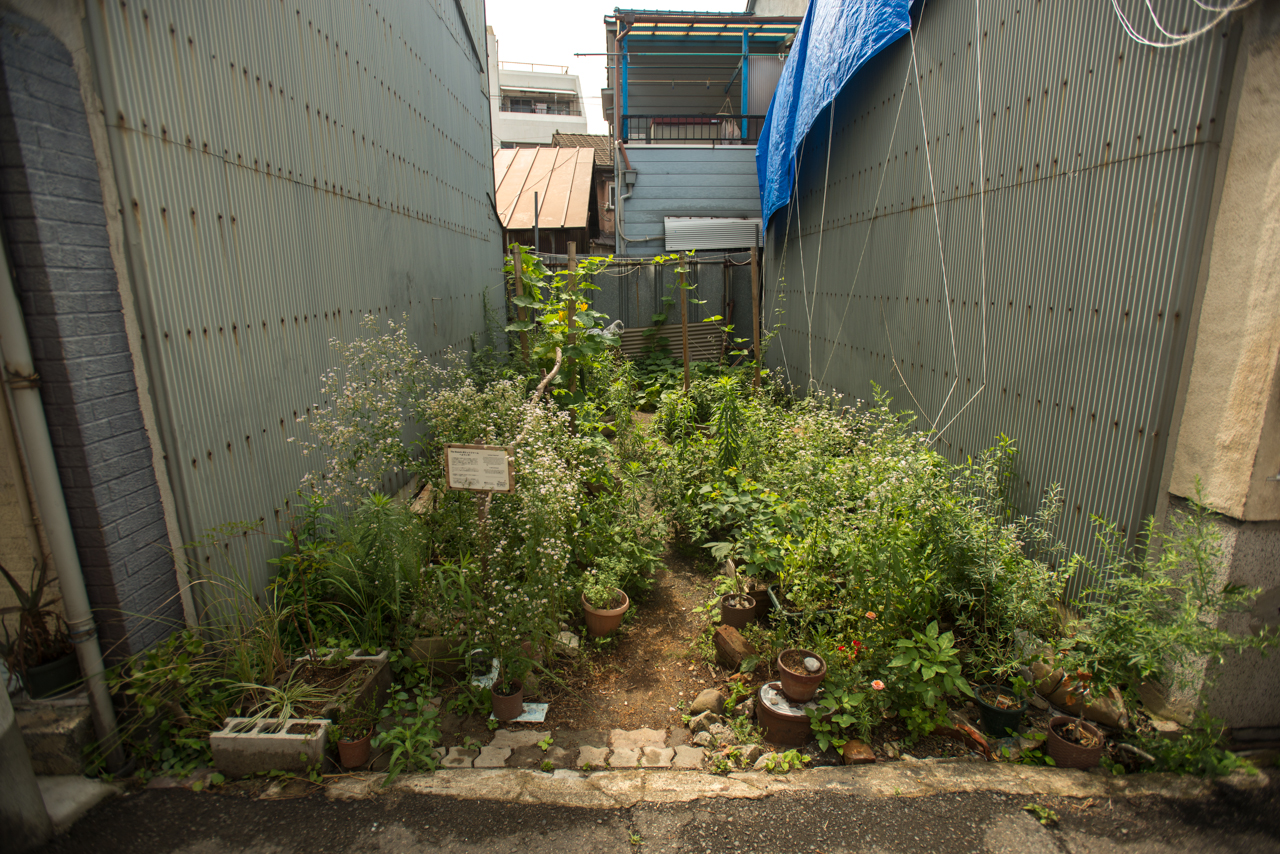 A small garden filled with green plants, in between tall grey buildings.